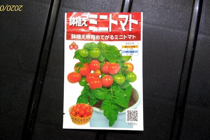 鉢植えミニトマトレジナ