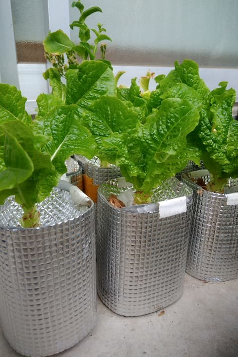 ペットボトル容器で水耕栽培