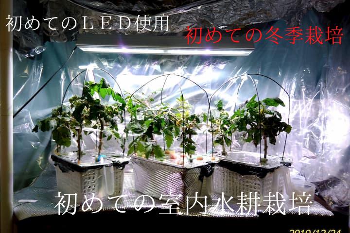 室内水耕栽培2019秋