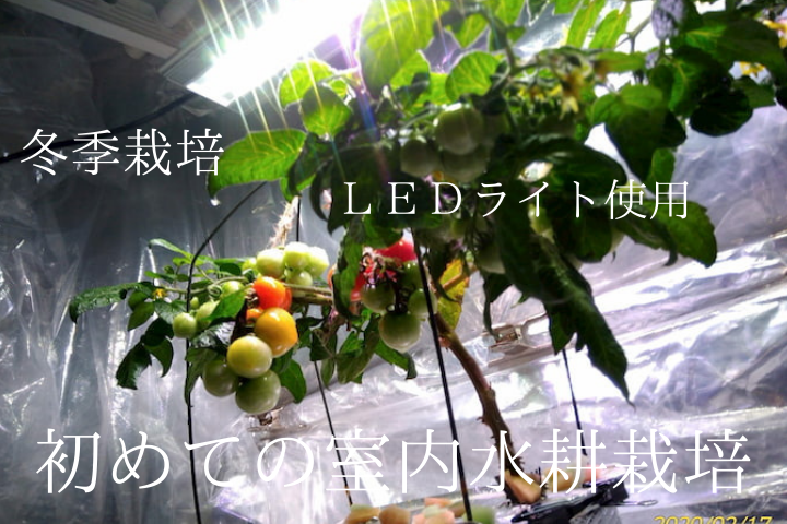 室内水耕栽培2020春