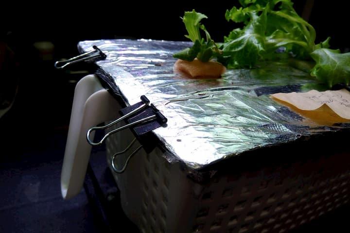 浅型水耕容器の新しい栽培面